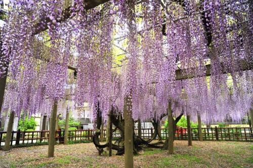 銚子市の歴史・文化